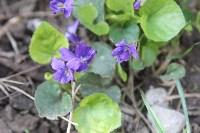 Краски весны в Туле, Фото: 10