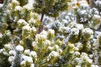 Мартовский снег в Туле, Фото: 14