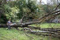 Мне нужнее: в тульском дворе подрядчик самовольно вырубил 15 ясеней и забрал их себе, Фото: 15