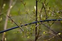 Весна 2020 в Туле: трели птиц и первые цветы, Фото: 43