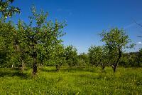 Летний день в Ясной Поляне, Фото: 33