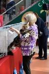 """Выставка """"Пряничные кошки"""" в ТРЦ """"Макси"""", Фото: 55"""