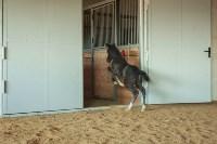 «Куликово поле» объявляет конкурс на лучшее имя для маленькой лошадки, Фото: 6