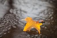 Золотая осень в Тульской области, Фото: 52