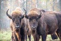 Куда свозить детей посмотреть на животных в 100 км от Тулы: обзор, Фото: 12