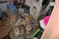 Похищенные собаки, Фото: 19