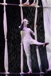 В Тульском цирке прошла премьера аква-шоу, Фото: 34