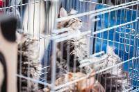 Выставка кошек в МАКСИ, Фото: 68
