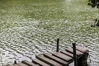 Туляки сообщают о массовой гибели уток в Платоновском парке, Фото: 8