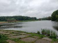 В пруду Центрального парка работала водолазная группа, Фото: 11