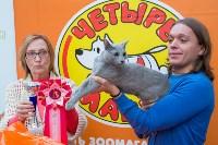 Выставка кошек в Туле, Фото: 70