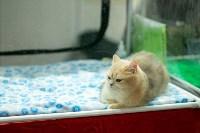 Пряничные кошки, Фото: 26