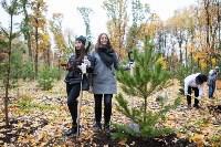 В Центральном парке Тулы появился сосновый бор «Слободы», Фото: 14