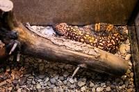 Тульский экзотариум: животные, Фото: 46