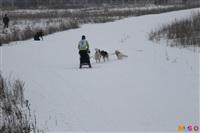 Куликово поле. Гонки на собачьих упряжках., Фото: 113