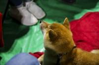 Выставка собак в Туле 14.04.19, Фото: 30