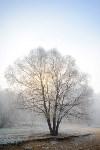 Ледяное утро в Центральном парке, Фото: 16