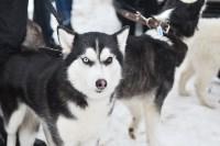 Праздник северных собак на Куликовом поле , Фото: 67