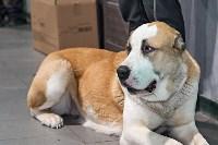 Выставка собак в Туле 26.01, Фото: 29