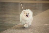Выставка собак в Туле, 29.11.2015, Фото: 91