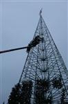 Установка новогодней елки на площади Ленина, Фото: 1