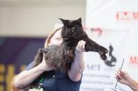 Выставка кошек в МАКСИ, Фото: 52
