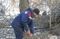 Кронирование деревьев в Туле: что можно, а чего нельзя?, Фото: 12