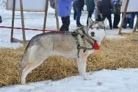 Праздник северных собак на Куликовом поле , Фото: 104