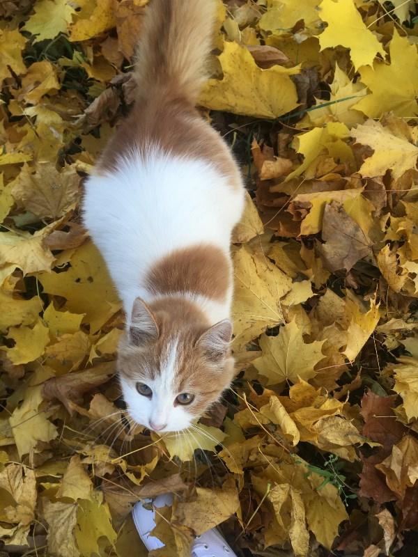 Кошки тоже любят осень.