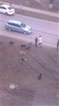 Бродячие собаки в Мясново, Фото: 4