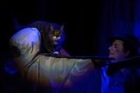 Театр кошек в ГКЗ, Фото: 64