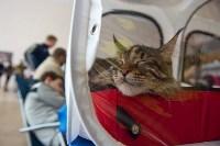 Выставка кошек в ГКЗ. 26 марта 2016 года, Фото: 54
