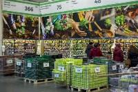 Леруа Мерлен: Какие выбрать семена и правильно ухаживать за рассадой?, Фото: 26