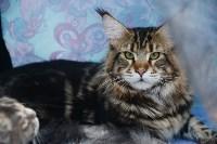 """Выставка """"Пряничные кошки"""" в ТРЦ """"Макси"""", Фото: 28"""