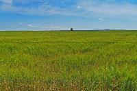 В Тульской области началась расчистка русел Оки и Упы, Фото: 19