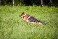 Овчарка вернулась домой через семь месяцев после пропажи, Фото: 8