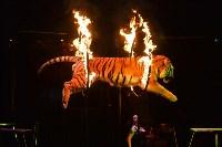 Цирковое шоу, Фото: 122