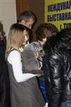В Туле прошла международная выставка кошек, Фото: 28