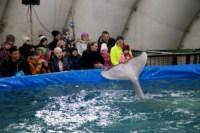 Дельфинарий в Туле, Фото: 2