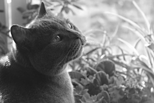 Конкурс без котиков - не конкурс