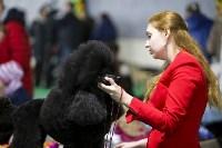 Выставка собак в Туле 14.04.19, Фото: 13