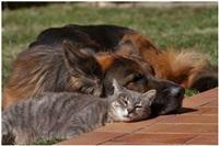Дружба животных, Фото: 1