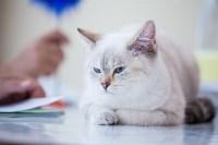 """Выставка """"Пряничные кошки"""". 15-16 августа 2015 года., Фото: 30"""