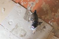 Донской. Собачий ад., Фото: 16