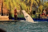 Шоу карибских дельфинов, Фото: 9