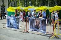В Центральном парке Тулы проходит фестиваль помощи животным, Фото: 31