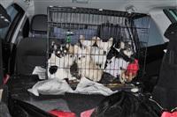 Похищенные собаки, Фото: 27