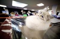 Выставка кошек. 4 и 5 апреля 2015 года в ГКЗ., Фото: 96