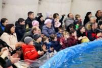 Дельфинарий в Туле, Фото: 8