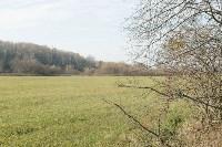 посадка леса в Одоевском лесничестве, Фото: 4
